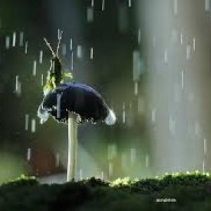 Pandangan Masyarakat Lombok Tentang Hujan
